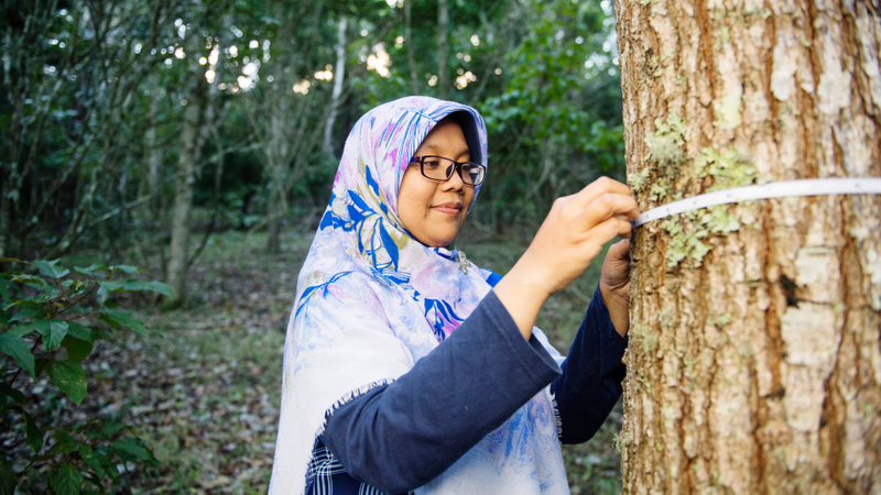International student wearing a head scarf measuring a tree trunk as part of her Forestry degree studies
