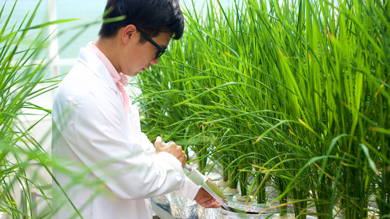 Man in lab coat conducting research in plant science laboratory