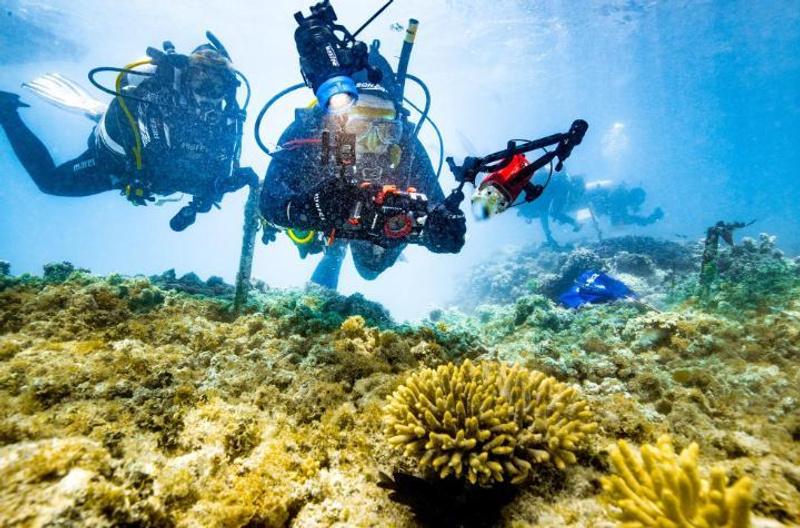 Scuba divers in a coral colony