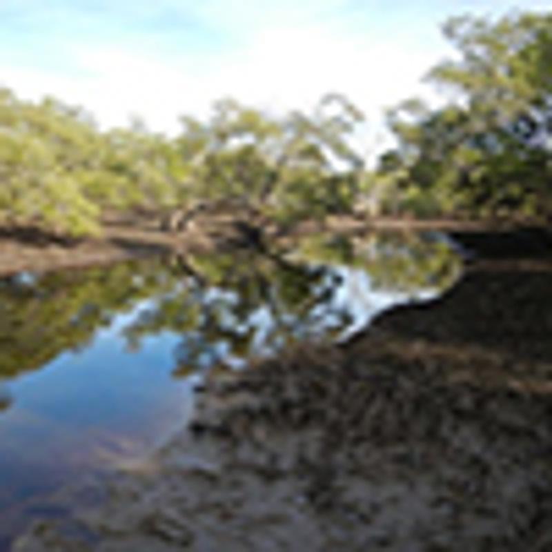seagrasses mangroves marshes