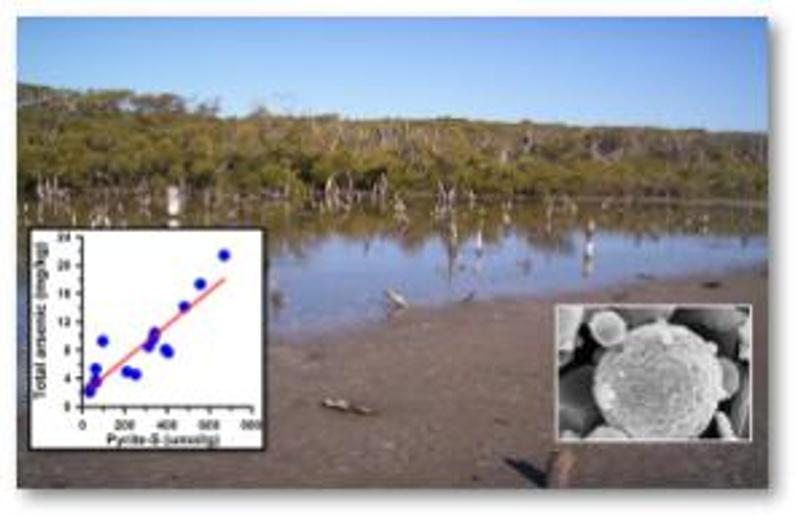 Image of a contaminated wetland