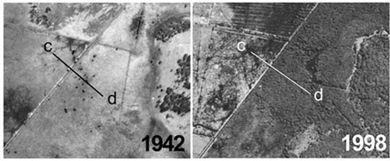 Melaleuca-Encroachment-1942,-1998